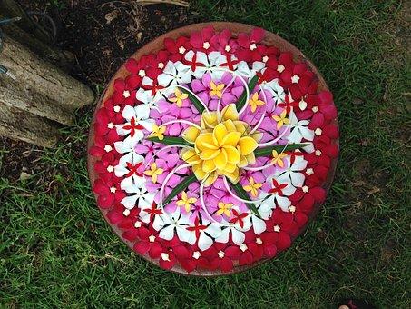 Flowers, Plumeria, Flower, Exotic, Tropicale, Yellow