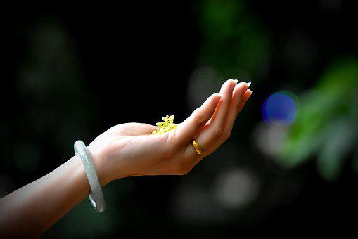 Hands, Light, Flower, Contrast, Round, People, Gold