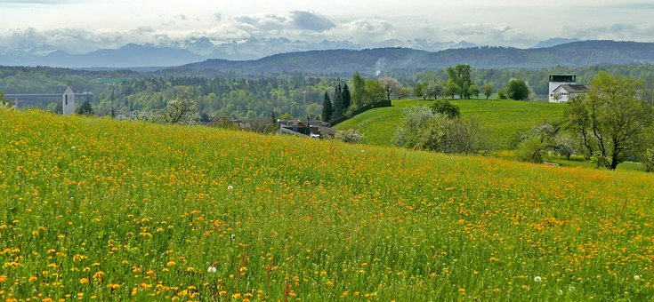 Landscape, Switzerland, Aargau, Nature, Meadow, Flowers