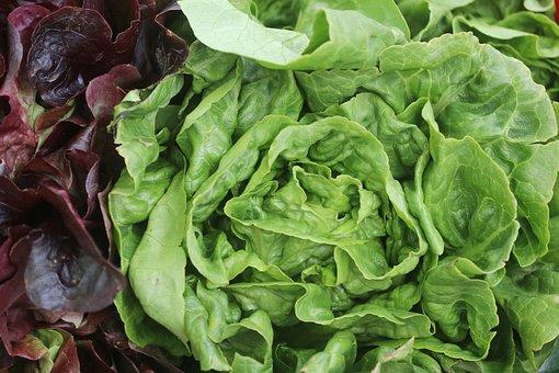 Food, Salad, Green, Vegetables, Healthy, Eat, Fresh