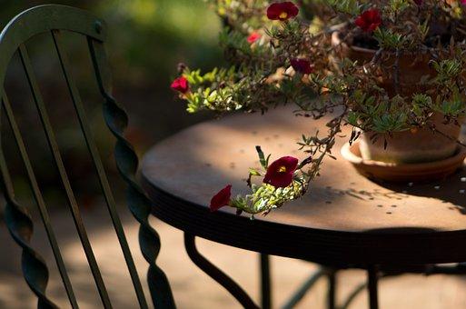 Garden, Light, In The Morning, Table, Chair, Flower