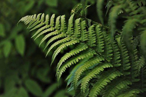 Green, Ferns, Flora, Plant, Botany, Rainforest, Jungle