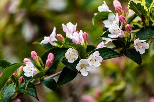 Pink Flower, Pink Blossom, Branch, Leaves, Pink, Spring