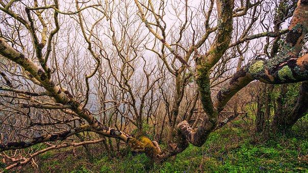 Tree, Aesthetic, Kahl, Coast, Light, Sea, Nature, Plant