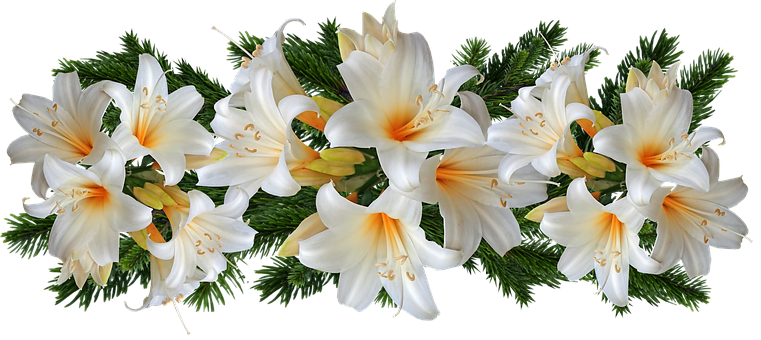 Lilies, Belladonna, White, Flowers, Arrangement, Garden