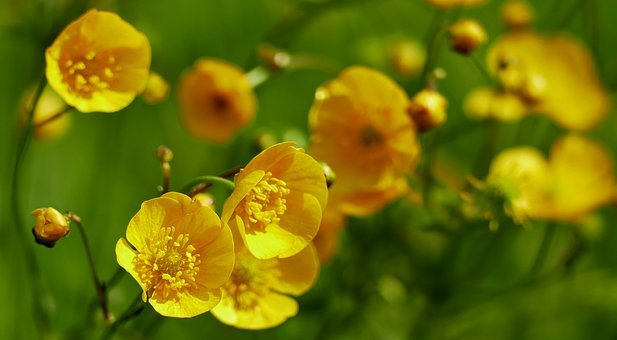 Nature, Landscape, Meadow, Flower, Daisy, Close, Bud