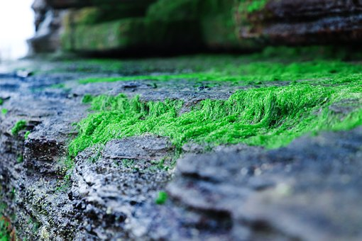 Rock, Moss, Moist, Igneous Rocks, Volcano