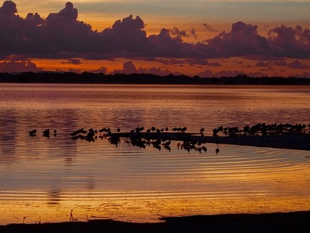 Sunset, Birds, Roosting, Shore, Migratory, Sky, Nature