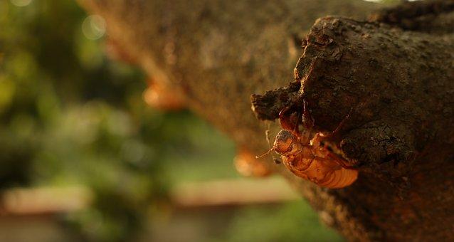 Cicada Covers, Climb, Tree, Nature, Fantasy, Success