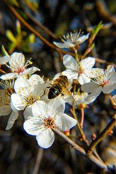 Bee, Flower, Nectar, Insect, Spring, Pollen, Garden