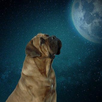 Dog, Moon, Moonlight, Night, Sky, Animal, Darkness