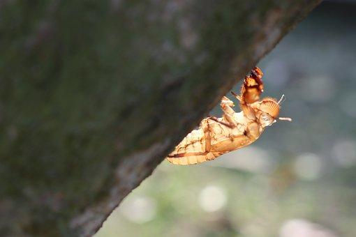 One Cicada, Skin, Cover, Born, Portrait, Newborn, Baby
