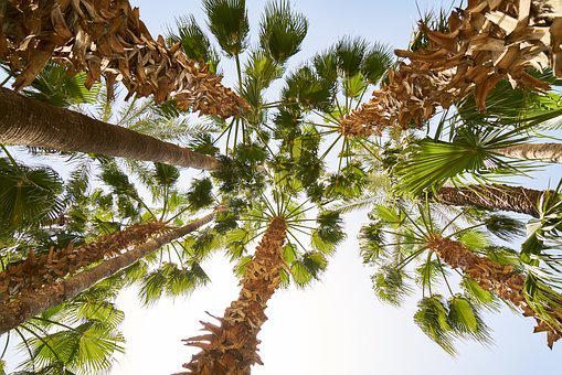 Holiday, Tropical, Palm, Tree, The Leaves Are, Leaves
