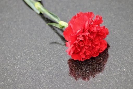 Red Carnation, Black Marble, Reflection, Symbol