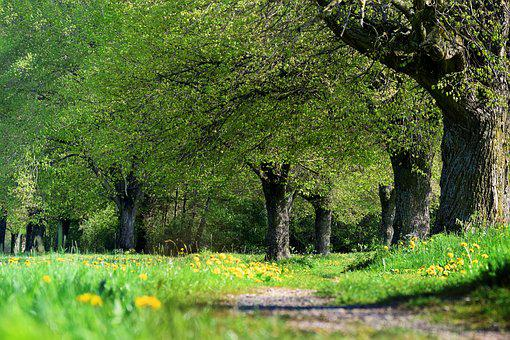 Away, Trees, Avenue, Hiking, Field, Spring, Rest