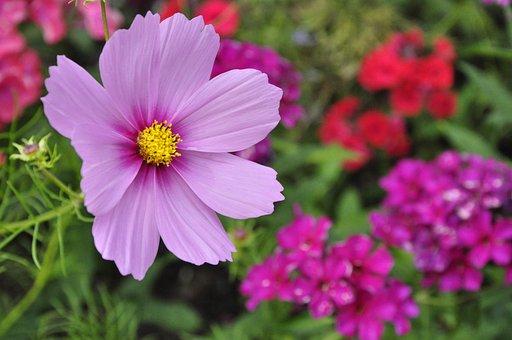Flower, Plant, Garden, Blossom, Bloom, Nature, Spring