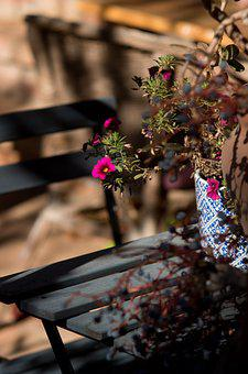 Light, Mood, Flower, In The Morning, Cyclamen, Table