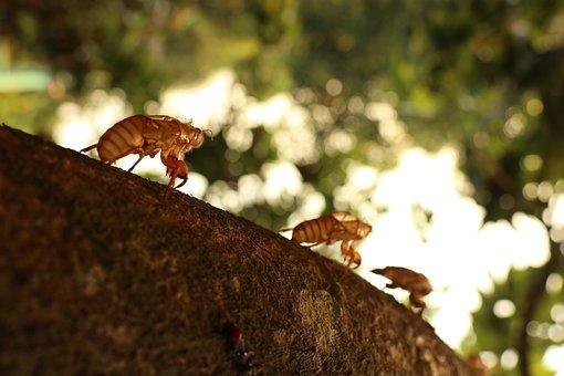 Uncover, Three Cicada, Newborn, Hanging, Climb, Tree