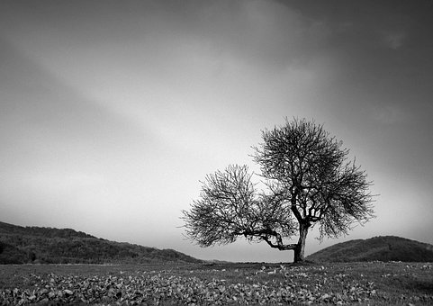 Tree, Loneliness, Landscape, Sadness, Lonely, Mood