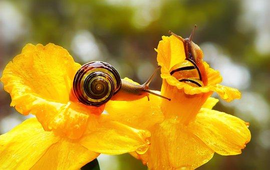 Wstężyki Gajowe, Molluscs, Flowers, Rain, Cup, Animals