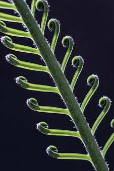 Palm Fern, Cycas Revoluta, Palm, Exotic, Crop, Plant