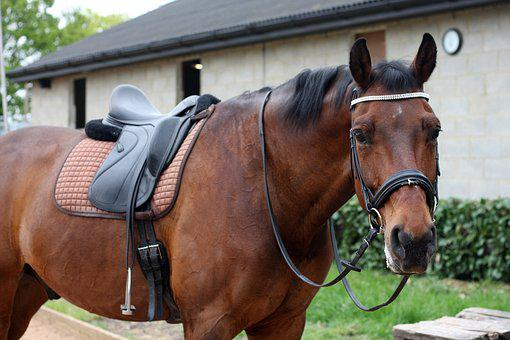 Dressage, Horse, Equestrian, Competition, Saddle
