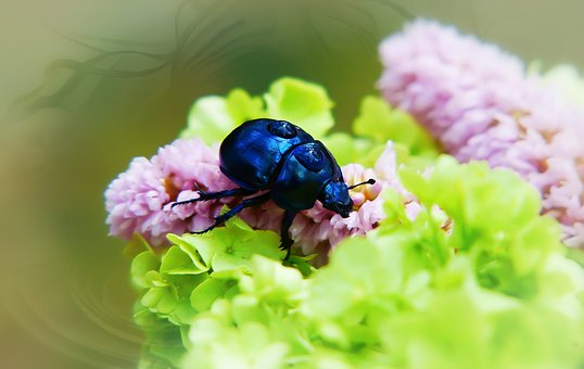 Forest Beetle, The Beetle, Drops, Rain, Flowers