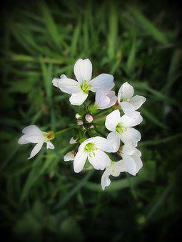 Flowers, White, Green, Nature, Garden, Grass, Beauty