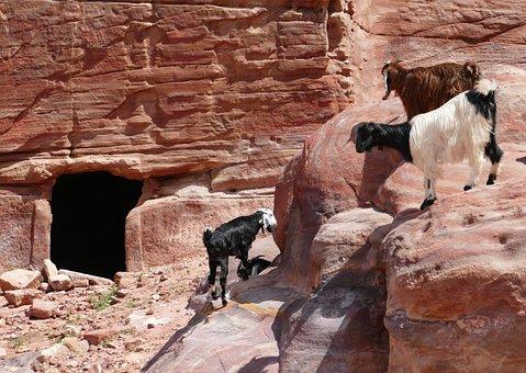 Jordan, Petra, Sand Stone, Canyon, Stone