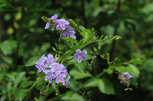 Flower, Green, Nature, Garden, Lavender, Beautiful