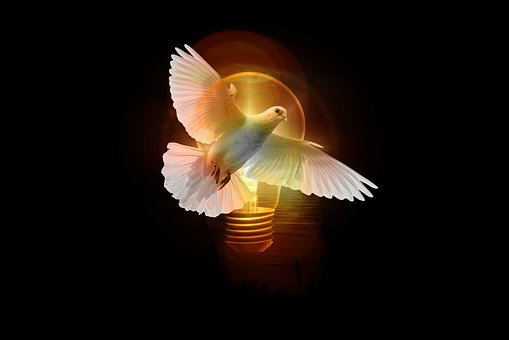 Dove, Light Bulb, Light, Pentecost, Holy Spirit