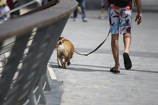 Dog, Man, Walk, Feet, Friend, Street