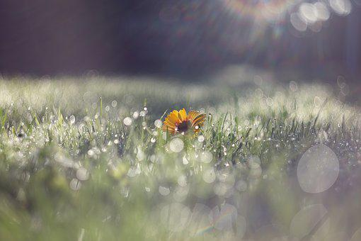 Morgentau, Wet, Drip, Nature, Meadow, Beaded