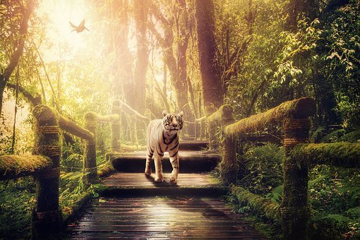 Jungle, Tiger, Away, Moss, Predator, White Tiger