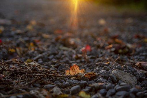 Autumn, Leaves, Nature, Colorful, Season, October