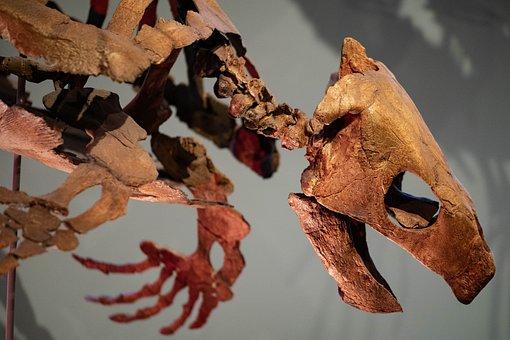 Fossilized, Turtle, Bones, Skeleton, Reptile, Old