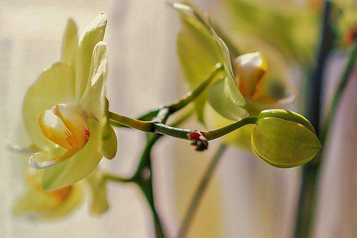 Orchid, Flower, Blossom, Bloom, Nature, Plant, Tropical