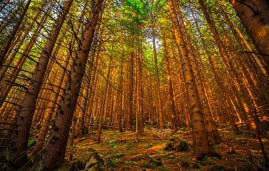 Tatry, Buried, Landscape, Mountains, Poland, Autumn