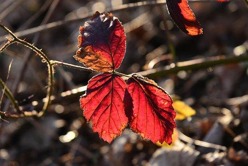 Autumn Leaf, Foliage, Twig, Vein, Pattern, Colorful