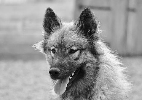 Dog, Dog Portrait, Animal, Canine, Mammal, Portrait