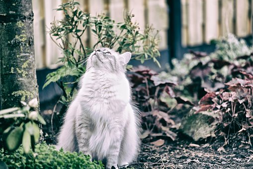 Cat, Pet, Animals, Type Of Cat, Feline, Cat Garden