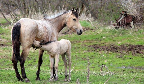 Nursing, Horse, Animal, Foal, Baby, Mother, Cute