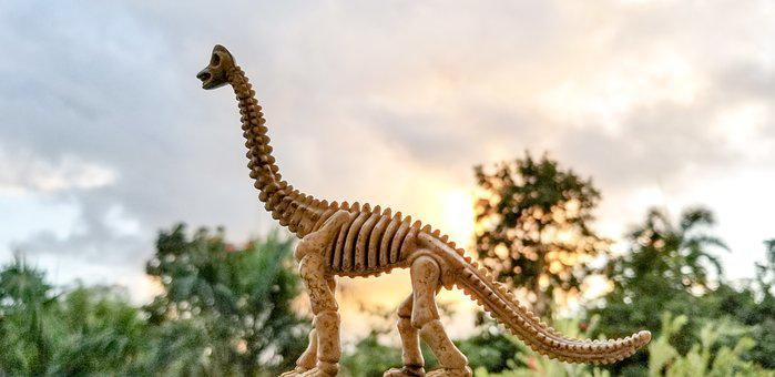 Toy Fossil, Dinosaur Fossil, Pretend, Extinct, Dinosaur
