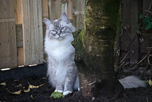 Cat, Pet, Animals, Feline, Cat Garden, Cat Hunting