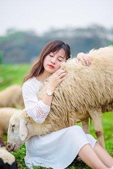 Girl, Sheep, Lamb, Field, Farm, Animals, Summer Dress