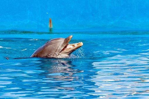 Spain, Valencia, Ozeaneum, Animals, Fish, Nature