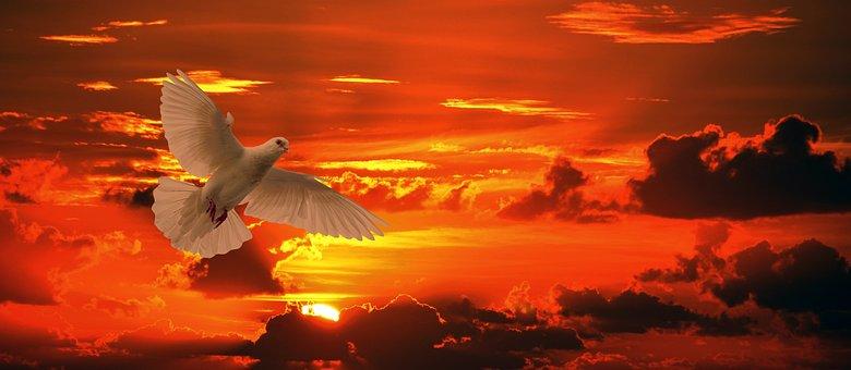 Dove, Bird, Flying, Orange, Sunset, Sun, Ease, Freedom