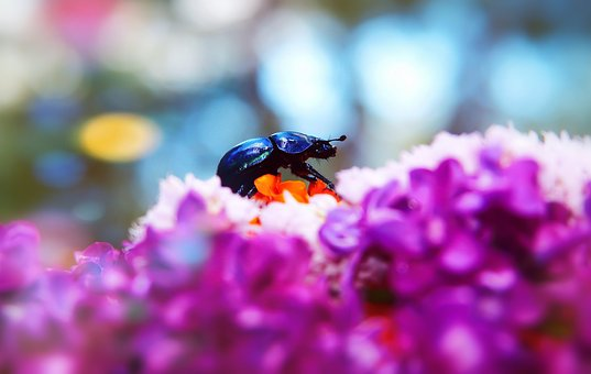 Forest Beetle, The Beetle, Flower, The Petals, Antennae