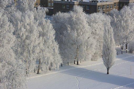 Winter, Leann, Trees, Frost, In Winter, Snow, Tree