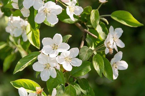 Flowers, Bush, Spring, Garden, Nature, Flourishing